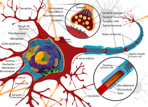 Neuromuscular Therapy NMT